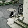 猫撮り散歩2300
