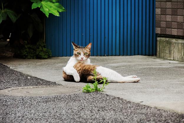 猫撮り散歩2301