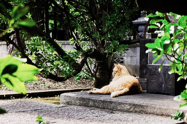 猫撮り散歩2302