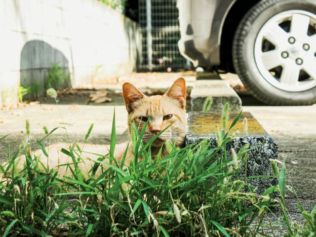 猫撮り散歩2305