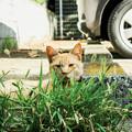 Photos: 猫撮り散歩2305