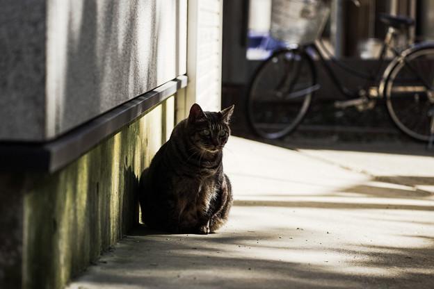 猫撮り散歩2306