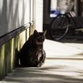 Photos: 猫撮り散歩2306