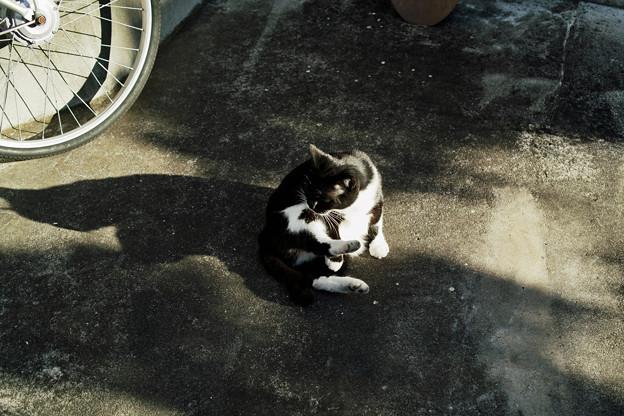 猫撮り散歩2307