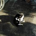 写真: 猫撮り散歩2307