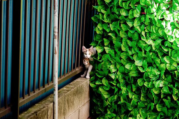 猫撮り散歩2308