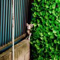 写真: 猫撮り散歩2308