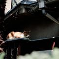 写真: 猫撮り散歩2309