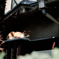 Photos: 猫撮り散歩2309