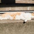 写真: 猫撮り散歩2313