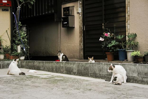 Photos: 猫撮り散歩2314