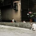 写真: 猫撮り散歩2314