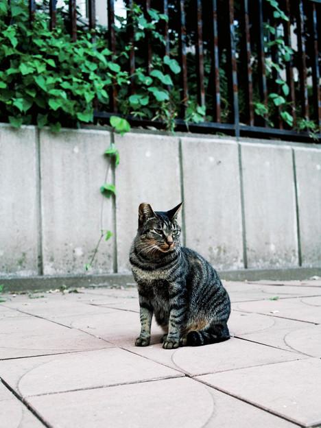 猫撮り散歩2316