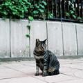 Photos: 猫撮り散歩2316