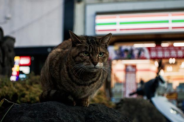 猫撮り散歩2320