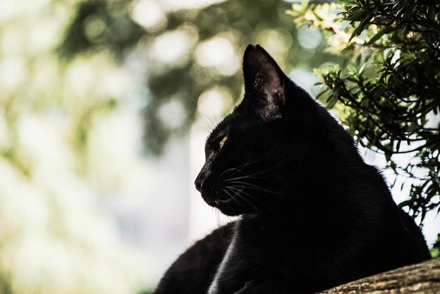 猫撮り散歩2327