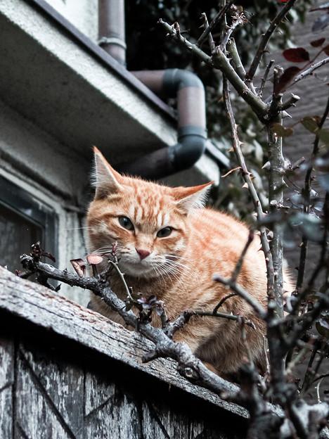 猫撮り散歩2330
