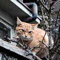 Photos: 猫撮り散歩2330