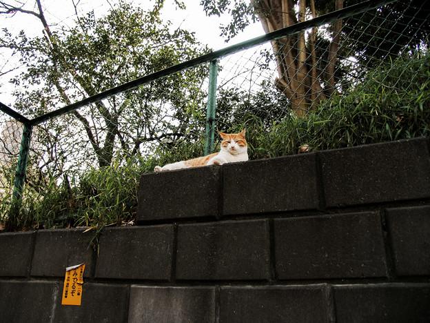 猫撮り散歩2331