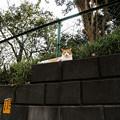 Photos: 猫撮り散歩2331
