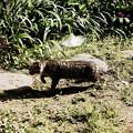 Photos: 猫撮り散歩2334