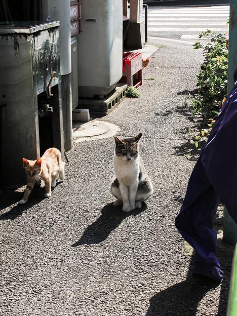 猫撮り散歩2337