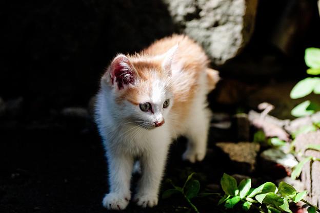 猫撮り散歩2341