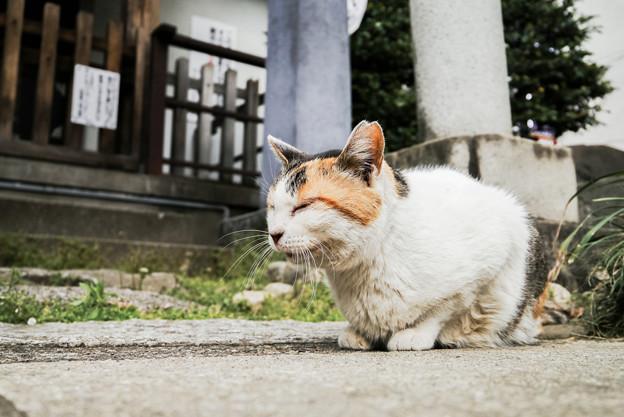 猫撮り散歩2343