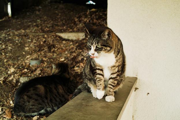 猫撮り散歩2350