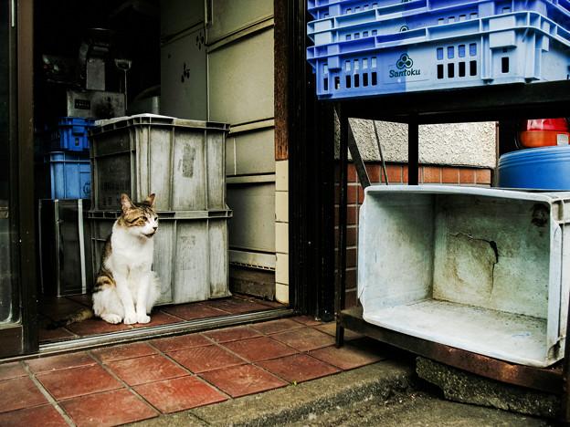 猫撮り散歩2352