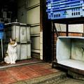 写真: 猫撮り散歩2352