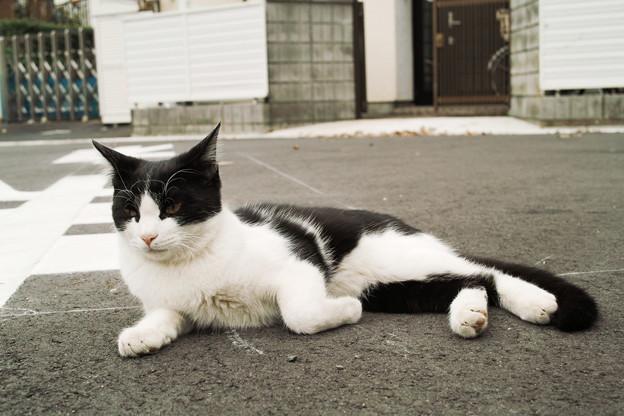猫撮り散歩2354