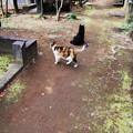 写真: 猫撮り散歩2355