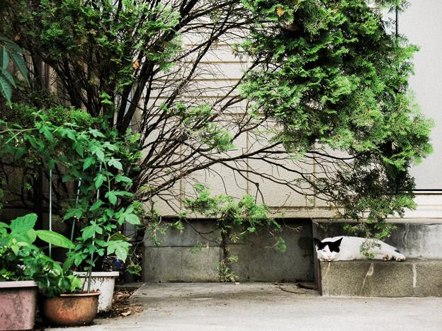 猫撮り散歩2357