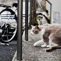 写真: 猫撮り散歩2359