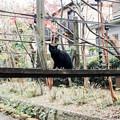 Photos: 猫撮り散歩2360