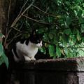 Photos: 猫撮り散歩2368