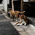 Photos: 猫撮り散歩2372