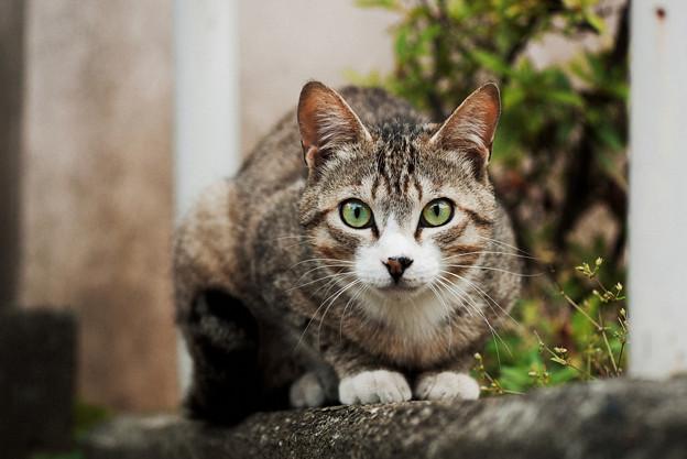 猫撮り散歩2378