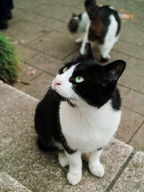 猫撮り散歩2385