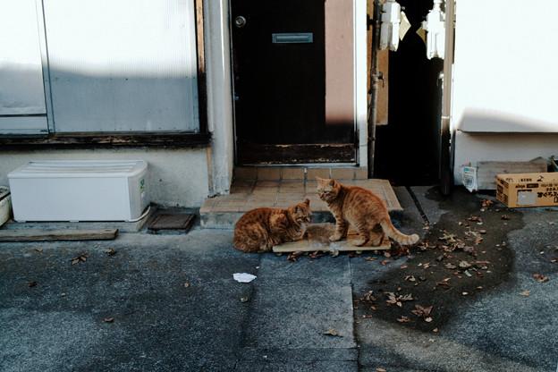 猫撮り散歩2396