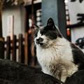 猫撮り散歩2404
