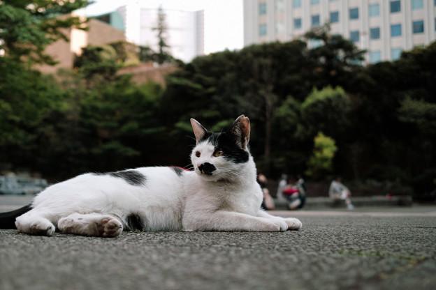 猫撮り散歩2407