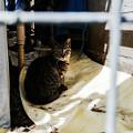 Photos: 猫撮り散歩2412
