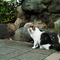 Photos: 猫撮り散歩2416