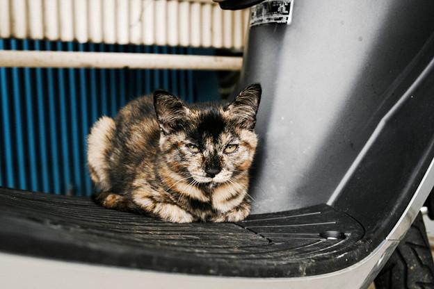 猫撮り散歩2422