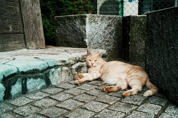 猫撮り散歩2426