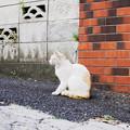 Photos: 猫撮り散歩2430