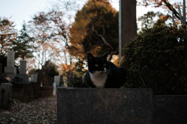 Photos: 猫撮り散歩2432