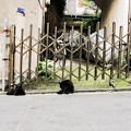 Photos: 猫撮り散歩2438
